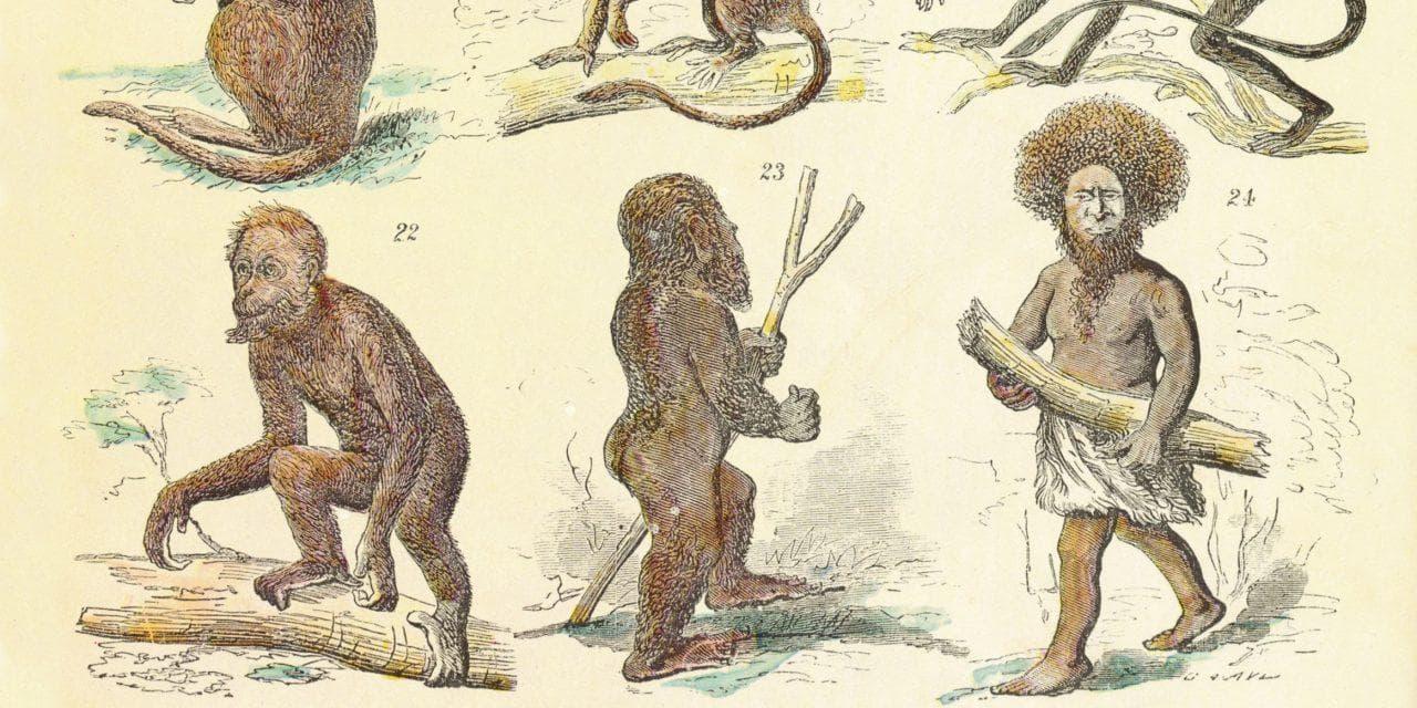 Macroevolution, Fact or Fiction?